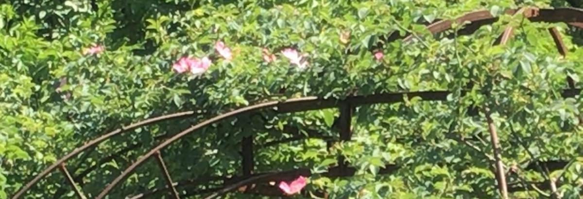 Heilpflanzen im Hofgut: Gartenkräuter für den Kreislauf – Mit Schwung auf die Füße  – Hofgut Tellmann