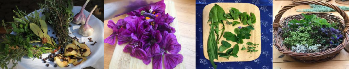 Heilpflanzen und 7 Tage Basenfasten – Hofgut Tellmann