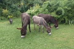 Socke und die Esel Moritz, Theresa und Beppo